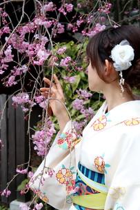 桜と着物姿の女性の写真素材 [FYI00259459]