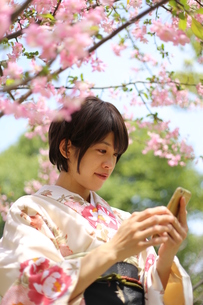 桜と着物姿の女性の写真素材 [FYI00259461]