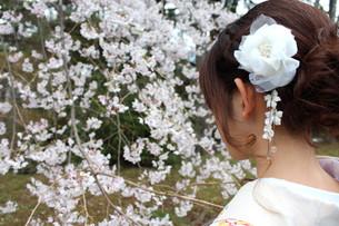 桜と着物姿の女性の写真素材 [FYI00259462]