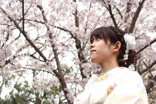 桜と着物姿の女性の写真素材 [FYI00259464]