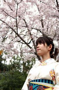 桜と着物姿の女性の写真素材 [FYI00259478]