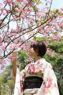 桜と着物姿の女性の写真素材 [FYI00259482]