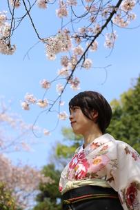 桜と着物姿の女性の写真素材 [FYI00259483]