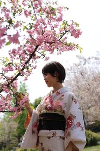 桜と着物姿の女性の写真素材 [FYI00259488]