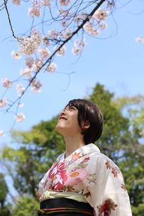桜と着物姿の女性の写真素材 [FYI00259493]