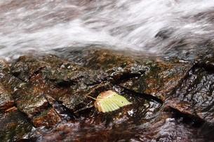 渓流の落葉の写真素材 [FYI00259775]