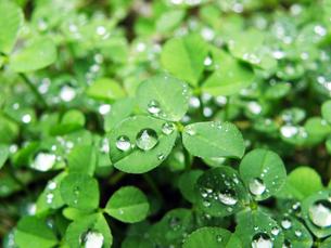 雨上がりの写真素材 [FYI00259791]