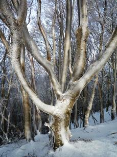 冬の木の写真素材 [FYI00259797]