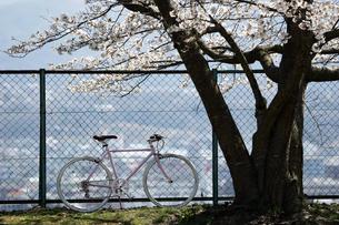 桜の木の下での写真素材 [FYI00259813]