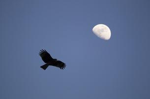月と鳥の写真素材 [FYI00259814]