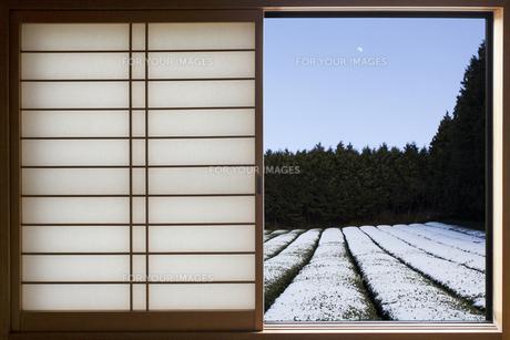 窓からの茶畑の写真素材 [FYI00259831]
