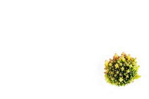 サボテンの素材、背景の写真素材 [FYI00259849]