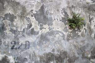 迷彩模様の壁の写真素材 [FYI00259850]