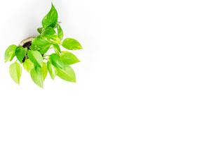 植物の素材、背景の写真素材 [FYI00259851]