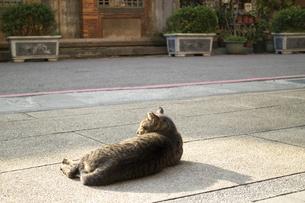 昼下がりの猫の写真素材 [FYI00259852]