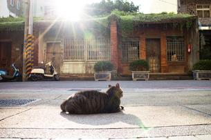 猫のいる風景の写真素材 [FYI00259854]