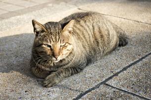 日向の猫の写真素材 [FYI00259870]