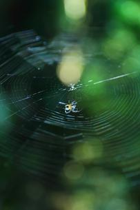渓谷の蜘蛛の写真素材 [FYI00259951]