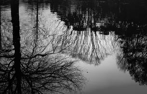池に映るの素材 [FYI00259975]