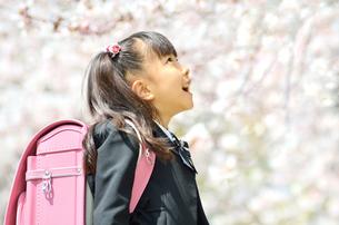 新一年生の女の子(桜)の写真素材 [FYI00260635]