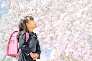新一年生の女の子(桜)の写真素材 [FYI00260642]