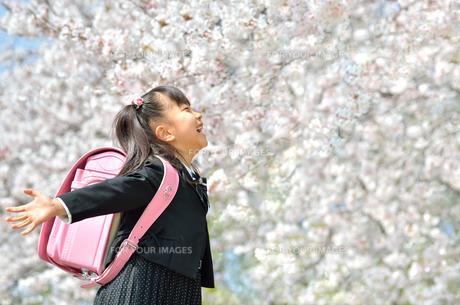 新一年生の女の子(桜)の写真素材 [FYI00260685]