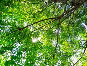 夏の木漏れ日の写真素材 [FYI00260979]