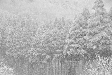 雪景色の写真素材 [FYI00261060]