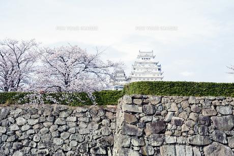 姫路城と桜の写真素材 [FYI00261084]