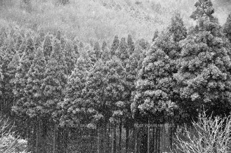 雪景色の写真素材 [FYI00261095]