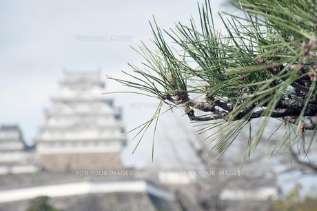 姫路城と松の写真素材 [FYI00261097]