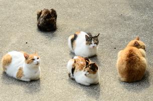 猫の写真素材 [FYI00261161]