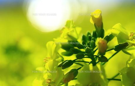 春の輝きの素材 [FYI00261429]