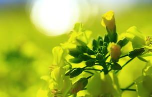春の輝きの写真素材 [FYI00261429]