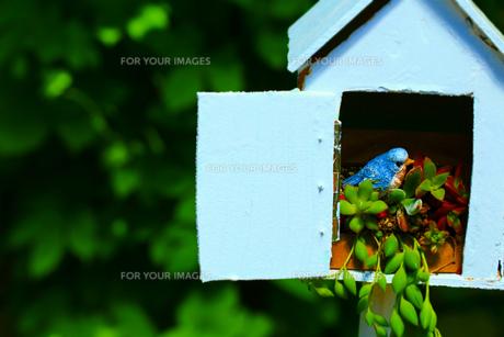 小鳥の部屋の素材 [FYI00261478]