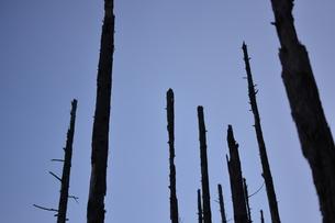 片倉ダムの朽木の写真素材 [FYI00261530]