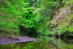豊英ダムの自然の写真素材 [FYI00261565]