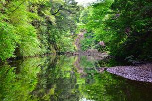 豊英ダムの自然の写真素材 [FYI00261566]