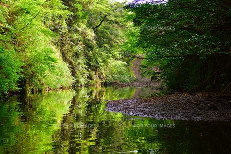 豊英ダムの自然の素材 [FYI00261571]