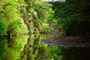 豊英ダムの自然の写真素材 [FYI00261571]