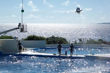 イルカのジャンプの写真素材 [FYI00261585]