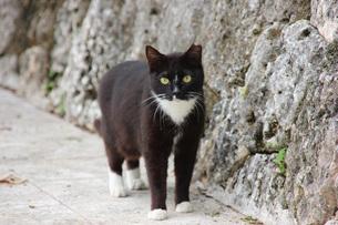 白黒の猫の写真素材 [FYI00261621]