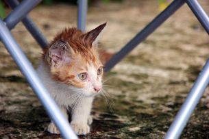 茶トラの子猫の写真素材 [FYI00261628]