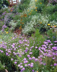 花壇の花の写真素材 [FYI00261652]