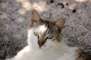 木陰にいたカメラ目線の、猫の写真素材 [FYI00261670]