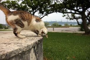 変なポーズの、猫の写真素材 [FYI00261671]