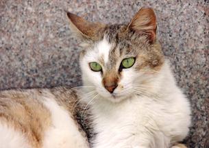 日陰でくつろぐ猫の写真素材 [FYI00261687]