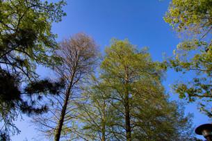 仰ぎ見る青空の写真素材 [FYI00261901]