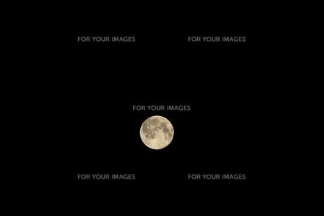 スーパームーン 黄色い月の写真素材 [FYI00261909]