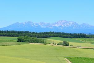 美瑛の丘と大雪山系の写真素材 [FYI00261918]